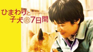 映画「ひまわりと子犬の7日間」の動画をフルで無料視聴する方法!