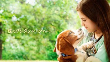 映画「僕のワンダフル・ジャーニー」(字幕/吹き替え)の動画をフルで無料視聴する方法!