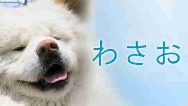 映画「わさお」の動画をフルで無料視聴する方法!